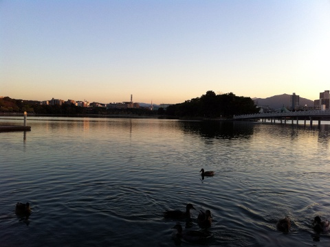 前日土曜、黄昏前の大濠公園