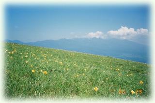 ニッコウキスゲ咲くヴィーナスライン