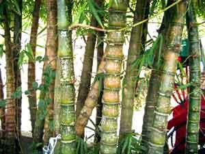 竹に落書き