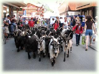バーンホフ通りを通り抜ける山羊の群れ