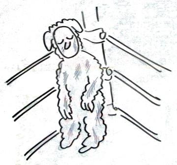 燃え尽きた羊